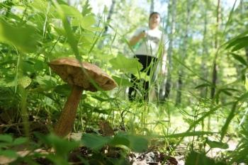 Названы районы Иркутской области, где чаще всего пропадают грибники и ягодники