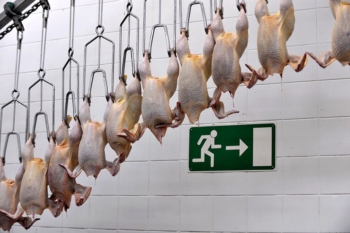 Курица, яйца и гречка подорожали в Иркутской области